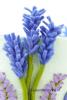 9 Lavendellichtje DSC00794