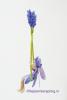 6 Lavendelschommel DSC01091