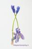 7 Lavendelschommel DSC01062